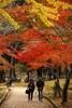 nara-koen-parc-japon-automne.jpg